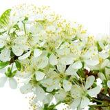 Flower lightness Royalty Free Stock Images
