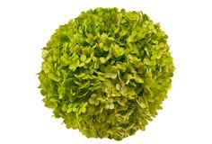 Free Flower-like Ball Stock Images - 43723804