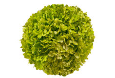 Flower-like ball. Flower in a green ball isolated on white Stock Images