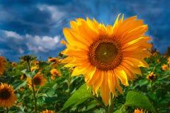 Flower like heart Stock Image