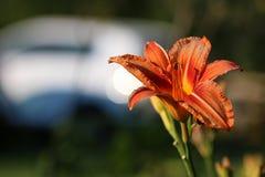 Flower liliac petal Stock Photo