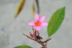 Flower. Lilly  garden  leaf  color Stock Images