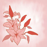 Flower lily Invitation or greeting card Vector Royalty Free Stock Images