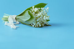 Flower lily of the valley on a blue background Royalty Free Stock Image