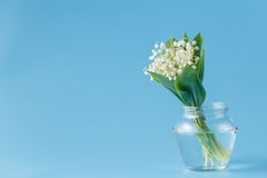 Flower lily of the valley on a blue background Royalty Free Stock Photos