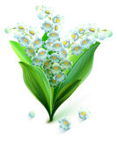 Flower lily valley. Bouquet lily of valley Royalty Free Stock Photography