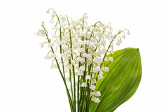 Flower lily of the valley isolated Royalty Free Stock Photo