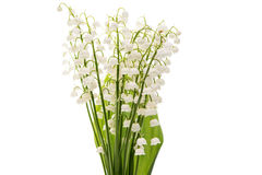 Flower lily of the valley isolated Royalty Free Stock Photography