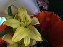 Flower, Lily, Yellow, Flora Stock Photography