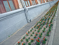 Flower line near industrial building, environment, Stock Image
