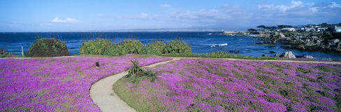Flower-lined ocean walk Royalty Free Stock Images