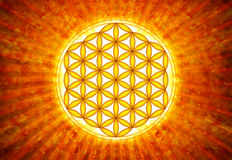 Flower Of Live Symbol - Sacred Geometry Stock Photography