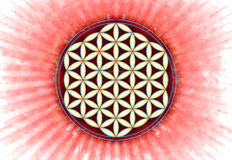 Flower Of Live Symbol - Sacred Geometry Stock Photos