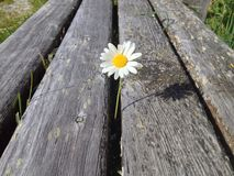 Flower. The lonely flower on the chair Royalty Free Stock Image