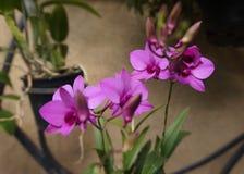 Flower-3  in the Longwood garden stock photos