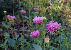Flower-4  in the Longwood garden stock image