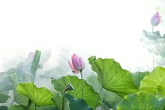 Flower, Lotus, Plant, Green Royalty Free Stock Photography