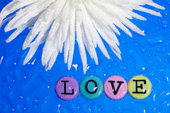 Flower and love. Background from valentine�s day. White flower and Love Stock Photos