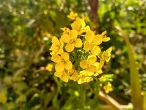 Flower of love. Yellow flower coloroflove Stock Photo
