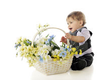 Flower-Loving Baby Stock Photography