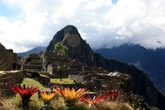 Flower at Machu Picchu Stock Images