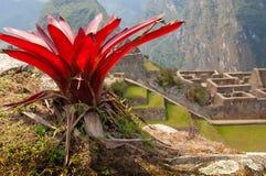 Flower in Machu Picchu (Peru) stock photo
