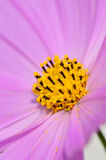 Flower macro Royalty Free Stock Images