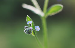 Flower macro Royalty Free Stock Photography