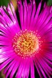 Flower macro Stock Photography