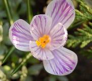 Flower macro #3. Violet flower Stock Image