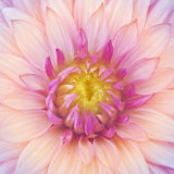 Flower macro Stock Images