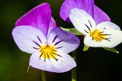 Flower macro closeup blossom Royalty Free Stock Photo