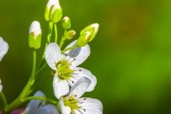 Flower macro closeup blossom Royalty Free Stock Images