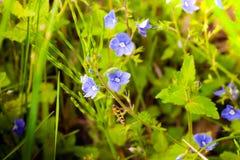 Flower macro closeup blossom Stock Photos