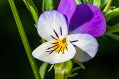 Flower macro closeup blossom Royalty Free Stock Photos