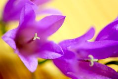 Flower macro extreme Royalty Free Stock Image