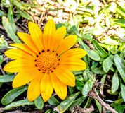 Yellow flower macro. Flower Macro photography Stock Photos