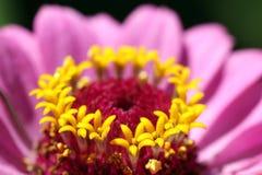 Flower macro Royalty Free Stock Photo