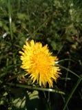 Flower Macroshot. Macroshot of a yellow flower Royalty Free Stock Images