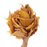 Flower made of autumn leaves Stock Images