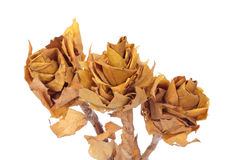 Flower made of autumn leaves Stock Photo