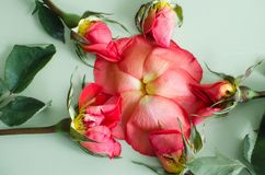 Flower made of petals and roses Royalty Free Stock Photography