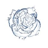 Flower made of water. rose. Isolated on a white background Stock Image