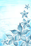 Flower made of water splash Royalty Free Stock Photo