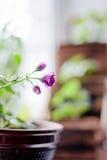 Flower of magenta geranium Royalty Free Stock Photography