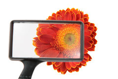 Flower through magnifier Royalty Free Stock Photo