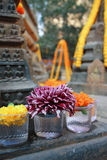 Flower at mahabodhi temple Stock Image