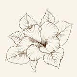 Flower of mallow Royalty Free Stock Photos