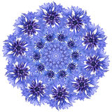 Flower mandala. Cornflower blue circular design. Royalty Free Stock Photo
