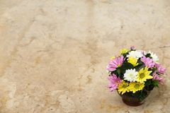 Flower on marble table Royalty Free Stock Image